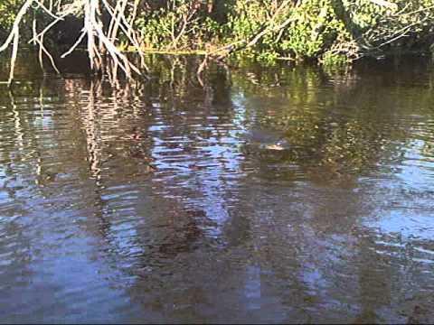 Bluegill Kayak Fly fishing