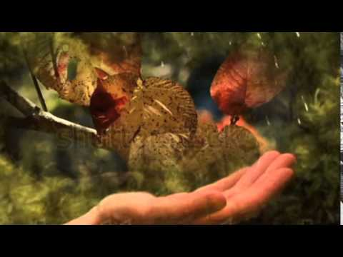 LUMINA DE TOAMNA  --    VERSURI GRIG SALVAN