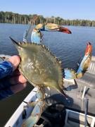 Crabbing in North Carolina