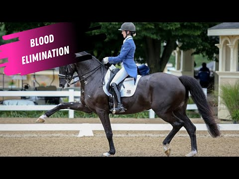 Dressage Disaster: Alice Tarjan Eliminated For Blood at Aachen In The Grand Prix
