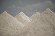cime di sale dolce di Cervia