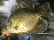 These Fish Have Healed Up Well From The Spawn…9/21/2021