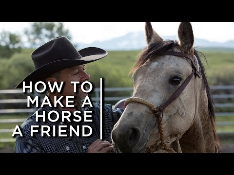How to make a horse a friend. One cowboy's partnership with horses