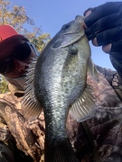 Eleven Inch  Cracker  Out of The Swamp…..10/2/2021