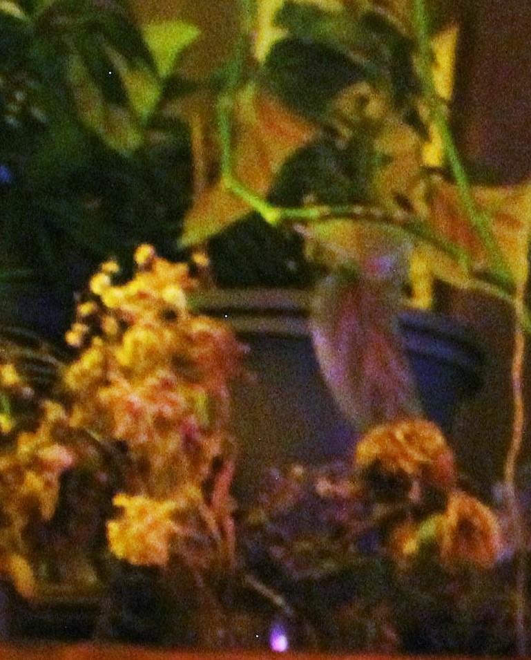 plant life 3