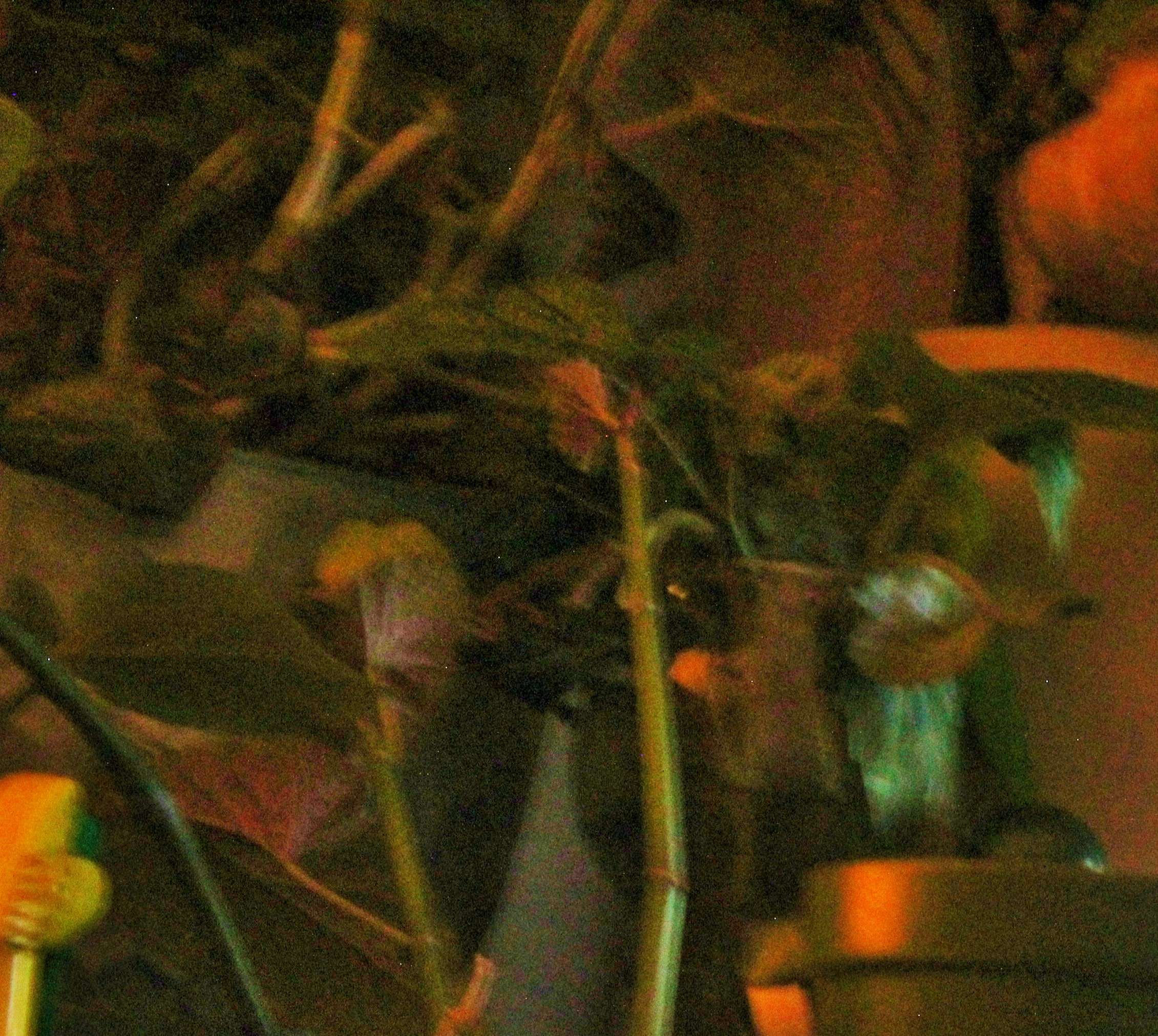 plant life 2