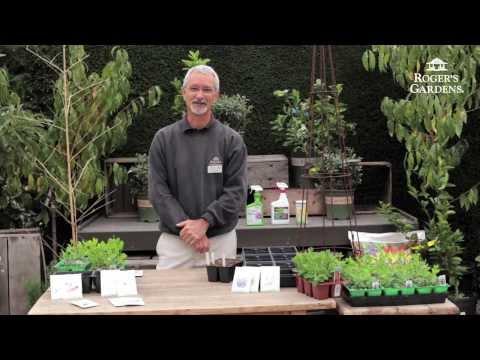 How to Grow Sweet Peas with Steve Hampson
