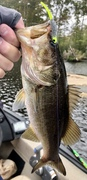 Largemouth Can't Resist the Crappie Jigs/Minnows……10/8/2021
