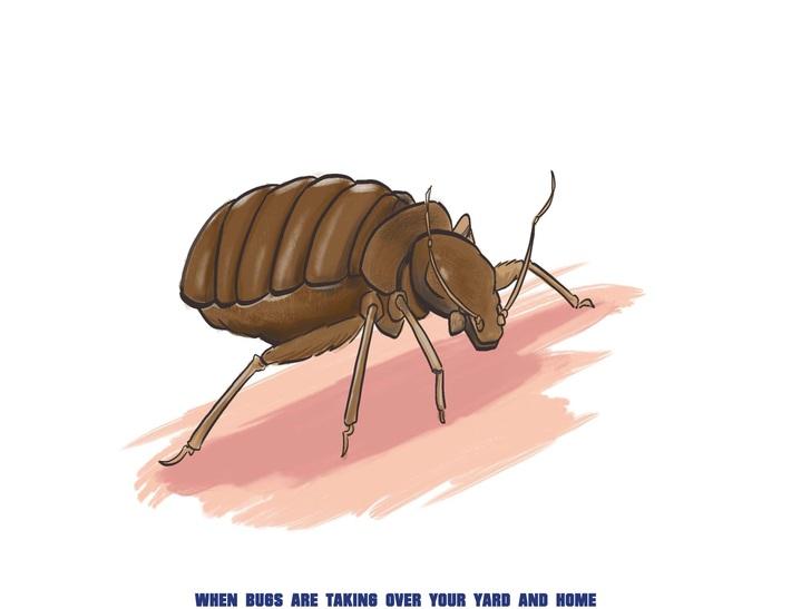 A1 Bed Bug Exterminator Davenport