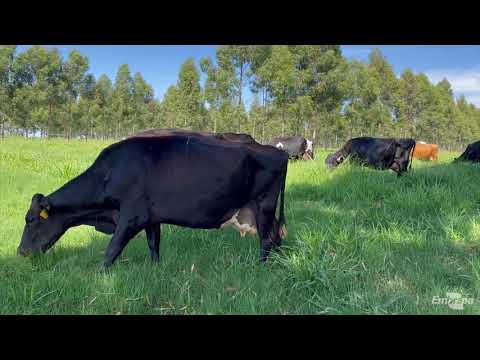 Implantação de  ILPF para produção de leite