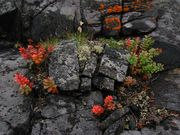 Rocks and Rhodíola rósea
