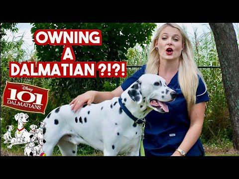Dalmatian puppies for sale in CA