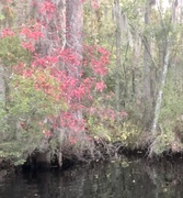 Fall Colors on The Albemarle……