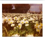 Integral Color Film/ ISO 640 Softtone Paul Giambarba Edition POLAROID Type 1200