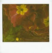 fiore-4