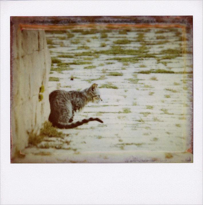 Il gatto di Marzamemi