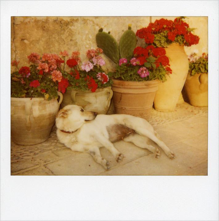 """mondo cane n° 4 - """"a cana"""""""