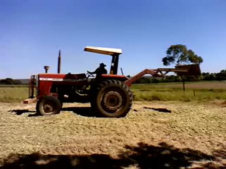 Ensilagem de milho. Descarregamento