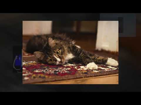 Rugs Cleaning Carpets Dublin Price|ecocleansolutions.ie|Call Us-35315039877