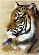 Tiger profile 2
