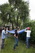 Fruit harvesting planning for 2012