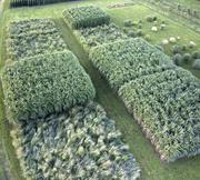 Biomass Information Meetings