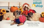 Adopt & Shop Howl-O-Ween Party