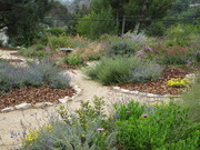 Gardening with Drought Tolerant Plants