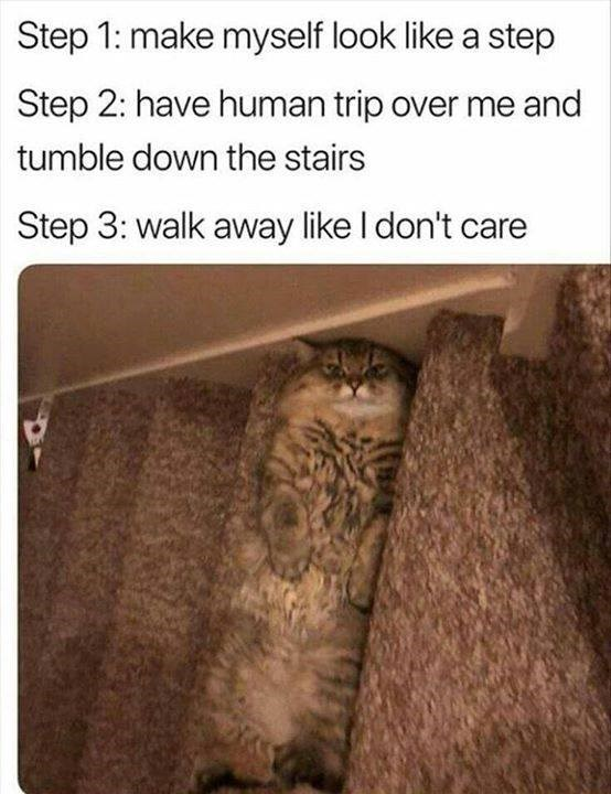 (tabby cat lying on their back across one step of carpeted stairs, almost invisible) Step 1: make myself look like a step / Step 2: have human trip over me and tumble down the stairs / Step 3: walk away like I don't care