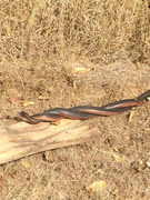verliefde slangen