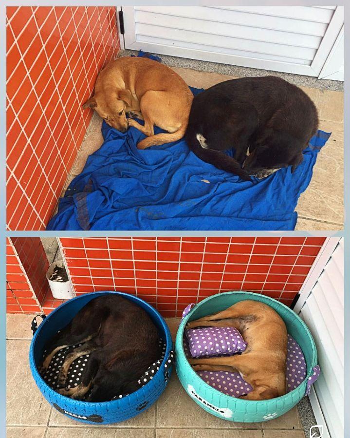 ძაღლის საწოლები, კატის საწოლები, საწოლი ცხოველებისთვის, ბლოგი, Qwelly, blog