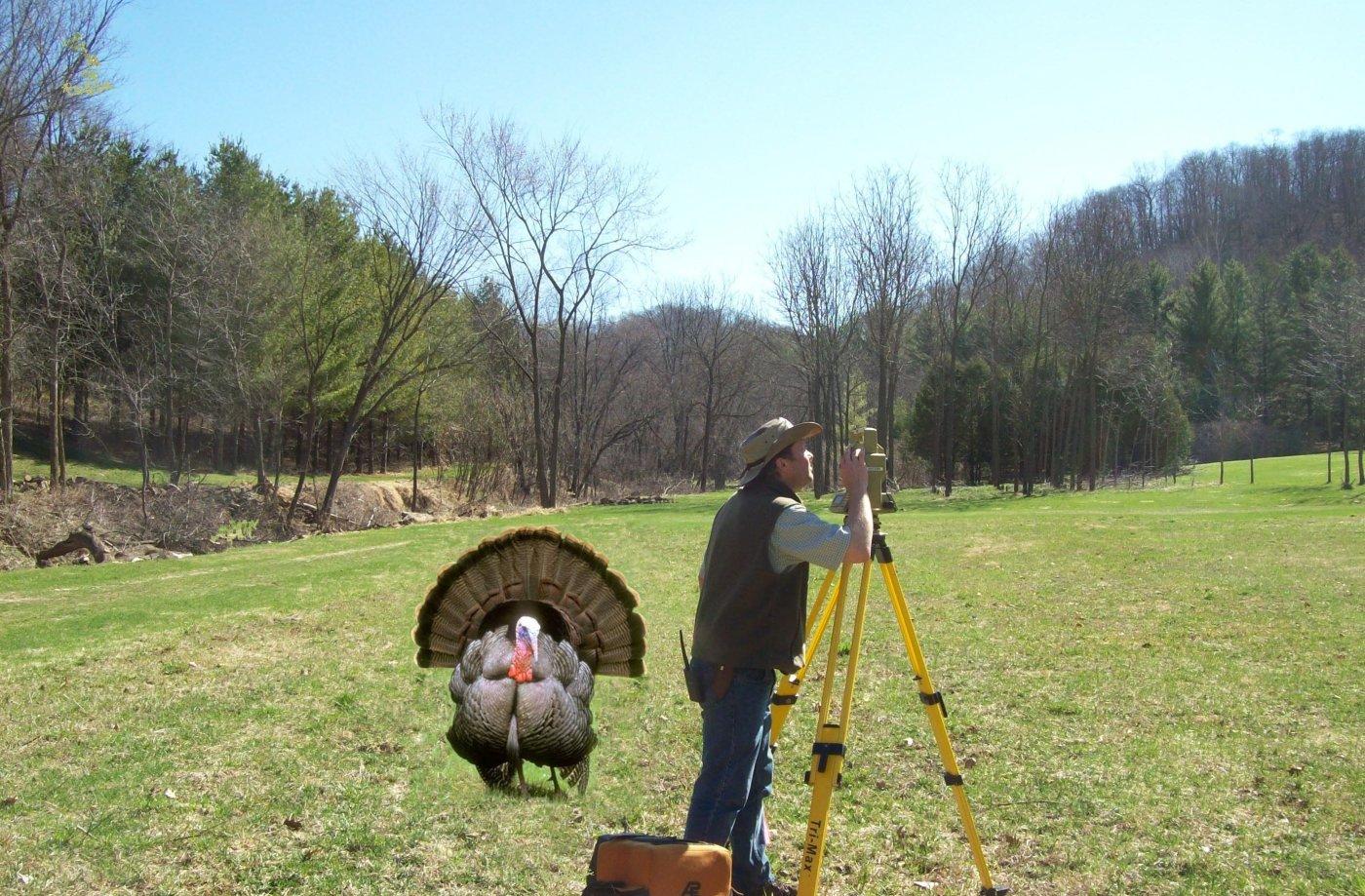 Two Wisconsin Turkeys (Turkesaurus Part 1)