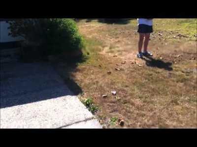 Camera Drones Videos | Drone Selfie Highlights | Using Drones For Environmental Surveying |