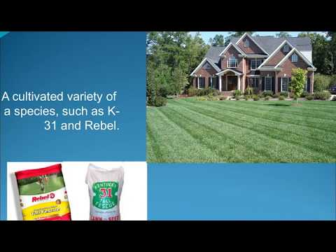 Jon Hill Turf | How to Care the different Type of Turf