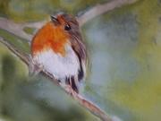 UK National Bird