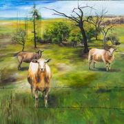 "60""x60"" Sheep in Meadow: Oil on Canvas"