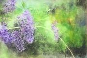 "14""x18"" Purple wreath: Watercolour"