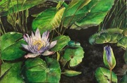 "14""x18"" Waterlily: Watercolour"