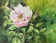 "14""x18"" Pink Country Rose: W&N Watercolour on Oil paper!"