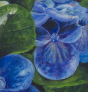 "30""x35"" Hydrangea detail: Oil on Canvas"