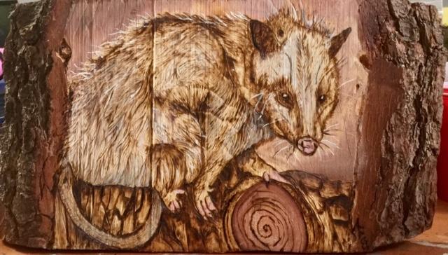 Pyro Possum nov 2018
