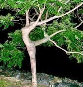 Nature Dancing