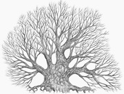 tree_doodle_XIV