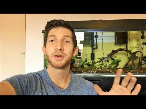 CHANGES to my 100L Aquarium!