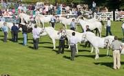2014 Connemara Pony Festival