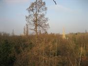Winter Tree Identification - GUIDED TREE WALK