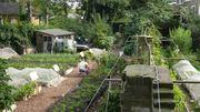 Help set up new food growing site in Hackney