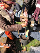 Creataing A Forest Garden - Saturday course