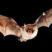 .Free PACT Wildlife Walk: bats with London Wildlife Trust