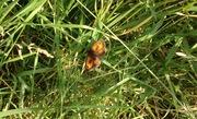 PACT Wildlife & Foraging Walk: Edible Flowers